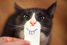 hello~ kitty / kitty kitty kitty