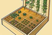 Garden / Gardening, DIY, plants, flowers herbs
