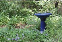 Gardens / by Jill