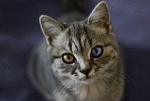 Kitties! / by Lisa Thompson