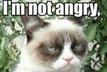 The Cat That Makes Me Laugh