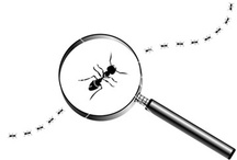 Bugs, bees and magnifiers