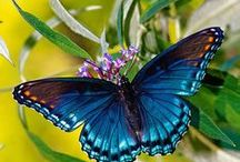 Butterflies / So delicate, so colorful, so Godlike