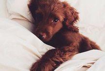 Warm fuzzies / Everything cute & cuddly