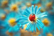 It's a BUGS Life / by ♥♡кαт ♍