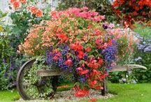 Gardening, Indoors and Outdoors / Gardens, nontraditional, beautiful and functional / by Nancy Turner