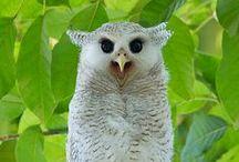 Birds / by Nancy Turner