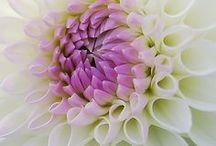 Flowers / by Nancy Turner