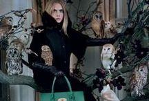 For the Birds / by Kristen Vinakmens