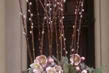 Container Gardening/Floral Ideas / by Lee Ann Spargo McCall