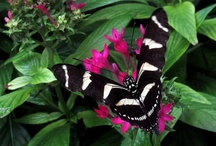 Butterfly Jungle / A board dedicated to sharing the beauty and joy that butterflies bring to our world.