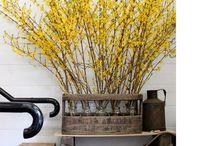 Florals / by Lauren Johnson