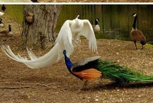 Animals - Birds Life / Animals and birds from anywhere.