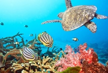 Discover Wildlife / Oasis Hotels helps protect the endangered species in Cancun and Rivera Maya. Please help us protect the enviornment....Oasis Loves U / by Oasis Hotels and Resorts