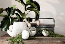 Plants   Flowers   Herbs