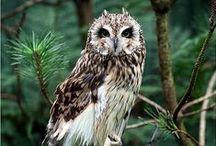 Amazing Wildlife   Birds