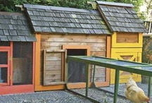 Chicken Coop Ideas / by Tina Coover