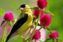 Birds of a feather / by Renee Rakoz
