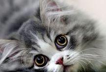 Cats...Cats...Cats / by Renee Rakoz