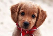 Baby Animals Make me Smile / Puppy pictures make me smile along with all baby animals. All that cute and cuddly is a simple mood booster and heart lifter. We can all use more of that.