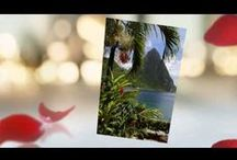 Weddings In The Caribbean / Weddings In The Caribbean  - If beach weddings are for you then Barbados is the perfect location. Barbados has so many beautiful locations ideal for a wedding. You can choose either a daytime ceremony for yourself and your guests to happily bask in the glorious sunshine, or opt for a dream sunset wedding.