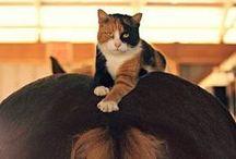 ~ Cats ~ / by Rebecca Doerflinger