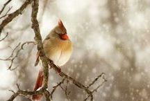 ~ Wings ~ / Birds, Birds, Birds / by Rebecca Doerflinger