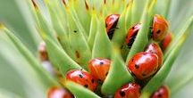 """Bright & Beautiful Bugs / You'll find many """"critters"""" in my designs such as ladybugs, birds, bumblebees, butterflies, and dragonflies. I mustn't leave out birds of all shapes and sizes along with their sweet nests."""
