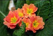 Coral - Orange & Pink Mix...