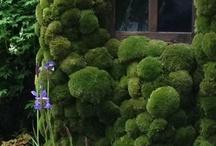 Mushroom, Lichen and Moss / by ❈Agnès ❧ Brun❈