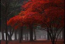 Trees / by ❈Agnès ❧ Brun❈