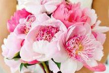 Wedding: Flowers / by Sofi B
