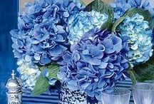 All Things Blue / by Robin AllThingsHeartandHome