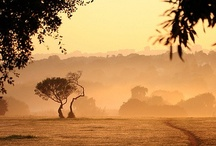 Africa / by travel42