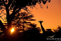 African Skies / by Wilderness Safaris
