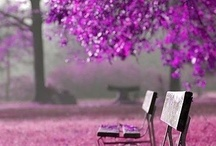 I heart purple / viola, violeta, violette...