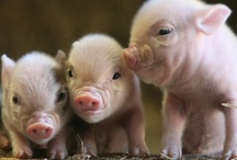 Pigs / by Kathy Mahnkey Moser