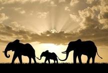 Elephants / by Kathy Mahnkey Moser