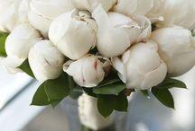 Flowers i adore..