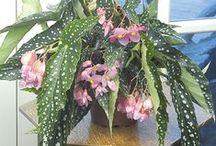 Plantas / Plantas