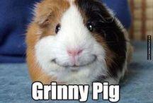 Animal Humor / Funny for all animal lovers