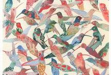 Hummingbirds / Animal art and illustration