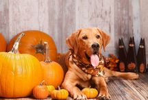 Holidays With your Pets / Having fun with your pets during the holiday seasons!