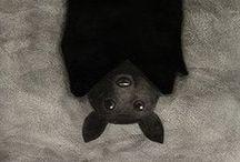 Bats / Animal art & illustration