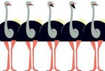 Ostriches & Emus