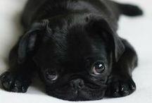 cuteness gracious