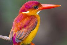 Feed the Birds / Beautiful #birds make me smile
