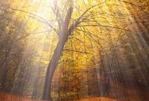 Luce - Light / Affascinanti effetti di luce - Amazing light effects