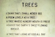 Only Trees ♥♥♥♥ / by Raquel Candanedo-Luciano