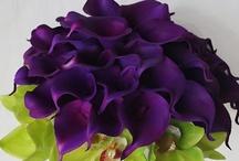 Fleurs / Flowers ♥♥♥♥ / by Raquel Candanedo-Luciano